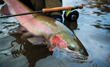 How To Catch Lethargic Salmon and Steelhead.