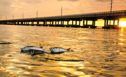 Learn how to match the hatch and catch more tarpon in