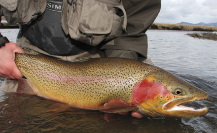 The flies all trout fishers should carry imitate broad insect groups like caddisflies, mayflies,