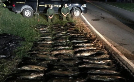 On Wednesday, November 2, law enforcement officials made a midnight bust of a massive poaching