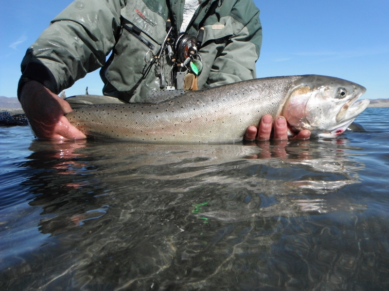Extinct Trout On The Rebound