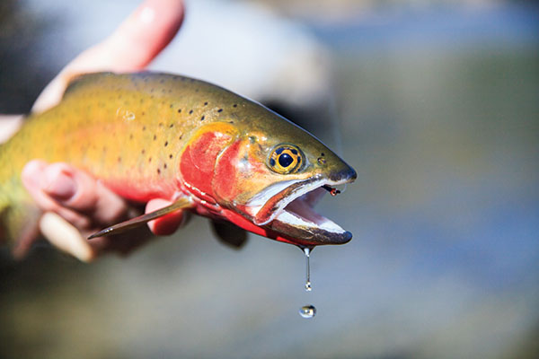https://www.flyfisherman.com/files/2017/06/FFMP-1601200-COL-02.jpg