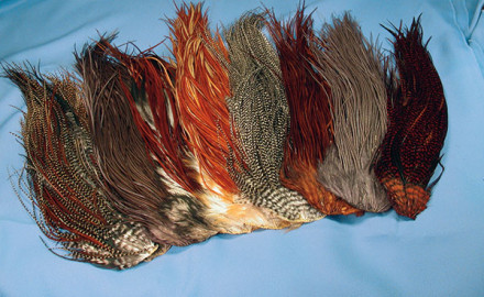 If you are careful with these details, you'll have perfect dry-fly hackle you can be proud of.