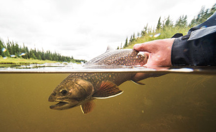 Fly fisherman the leading magazine of fly fishing for Hudson bay fishing