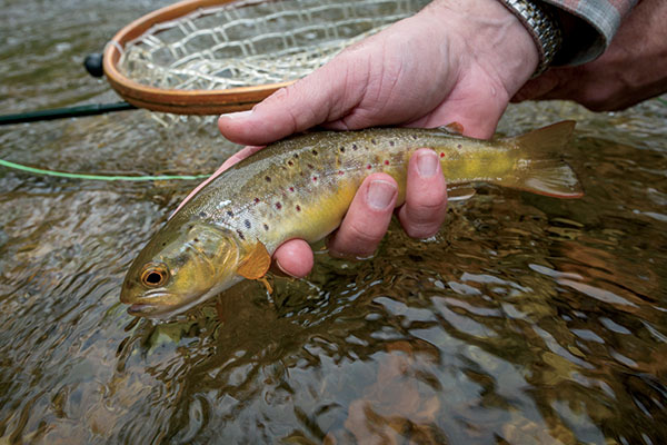 Philadelphia trout fly fisherman for Fly fishing pa