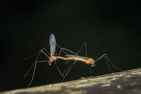 Crane Flies, Damselflies, and Mice
