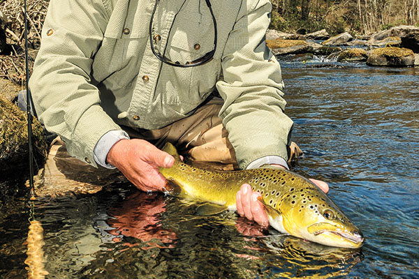 Brown Trout on Brodhead Creek