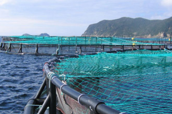 Cooke-aquaculture-Belleoram-NL-s-wide