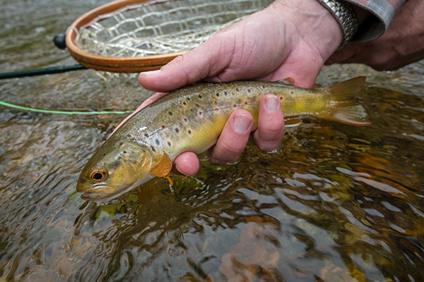 5-Best-Trout-Fishing-Spots