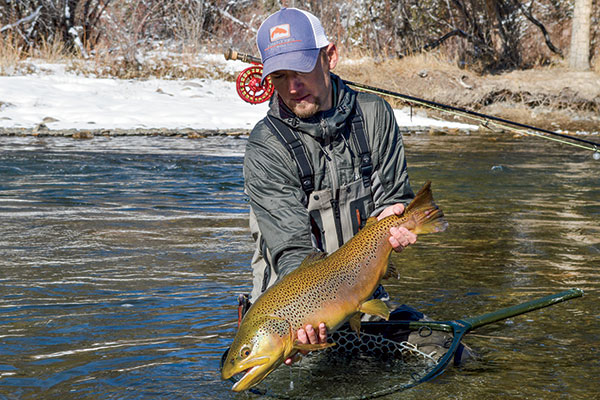 Big-Brown-Trout-on-the-Uncompahgre-River