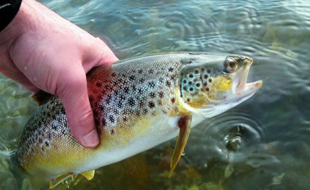 Mercury in Fish Pellets