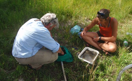 Rocky Mountain Bio Lab Conducting Research on Stoneflies