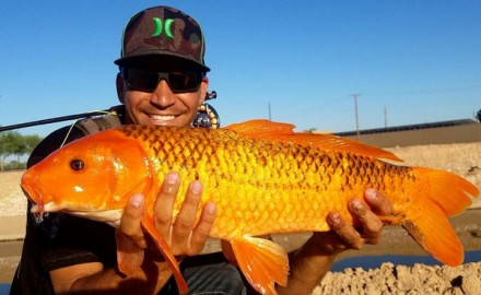 Ryan Russell of Arizona Fly Fishing Adventures, specializes in desert carping with a fly rod. Find out how he got started and how you can fish with him.
