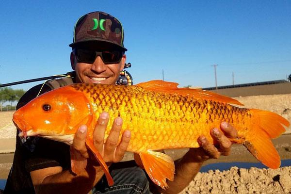 Arizona-Fly-Fishing-Adventures