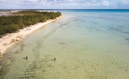 The annual bonefish migration which takes place along Abaco Island, is thriving because of help from Bonefish & Tarpon trust and local community members.