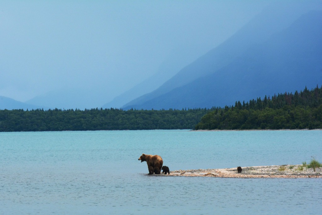 Bristol Bay #2 on America's Most Endangered Rivers