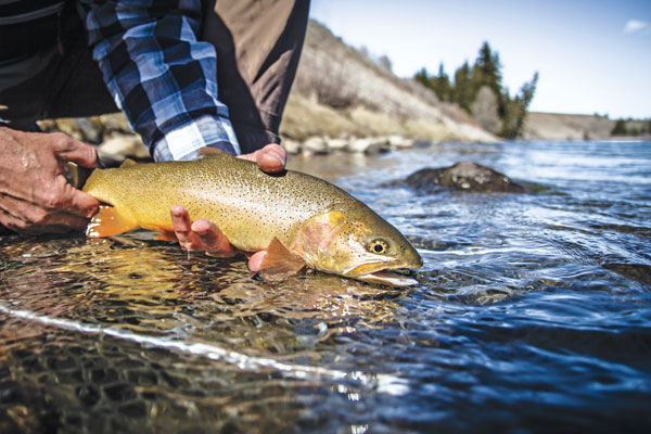 Cutthroat-Trout-in-the-Snake-River