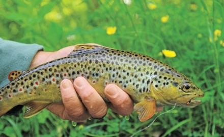 Fly fishers need to exhibit 'situational awareness' and fish nymphs designed to trigger a strike when trout are keyed on a particular food item.