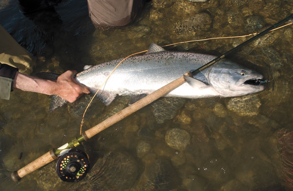 Chasing-King-Salmon-on-the-Big-Manistee