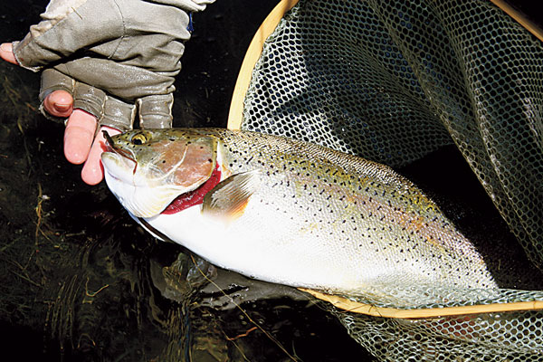 Beetle Patterns Take Summer Trout