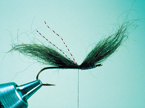 //www.flyfisherman.com/files/fly-tying-the-dc-leech/dc-leech-step-2-fly-fisherman.jpg