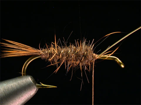 //www.flyfisherman.com/files/hares-ear/hares-ear-nymph-step-5.jpg
