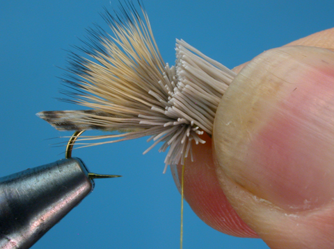 //www.flyfisherman.com/files/letort-hopper/letort-hopper-step-10.jpg