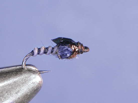 //www.flyfisherman.com/files/midges-top-to-bottom/dorseys-medallion.jpg