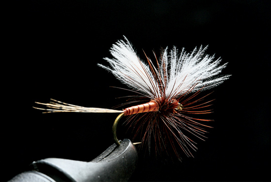 //www.flyfisherman.com/files/trusty-rusty-fly-recipes/rusty-cdc-hackled-biot-spinner.jpg