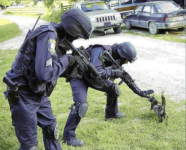 Caption Contest: SWAT Kitty