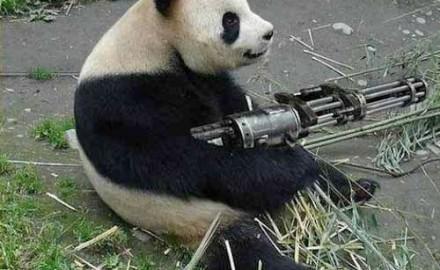 Panda_gunner