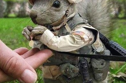 colonel squirrel