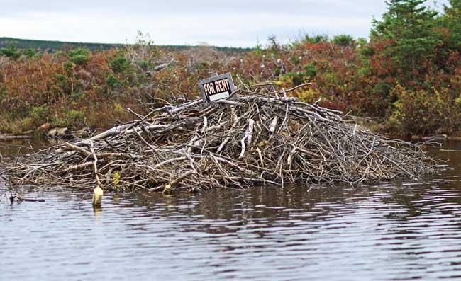 Newfoundland8
