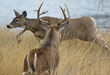 bh_deer-management-2010_pl