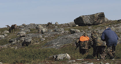 Caribou hunting can be feast or famine, and the Bowhunter crew tasted a little of both.