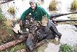 bw_moose_0810pl
