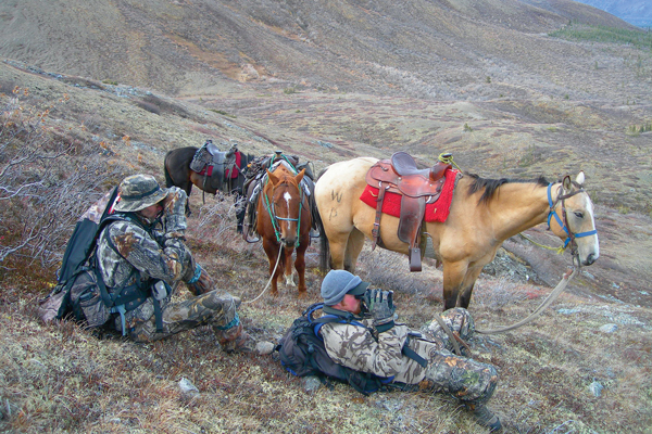 moose-attack-hunt