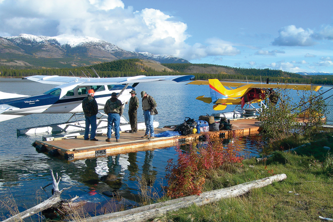 moose-attack-video