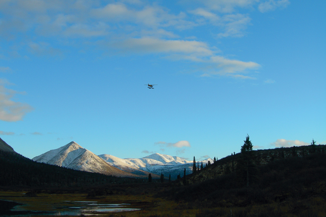 moose-attack-view