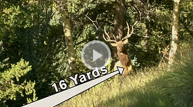 VIDEO: Bowhunting New Mexico Elk