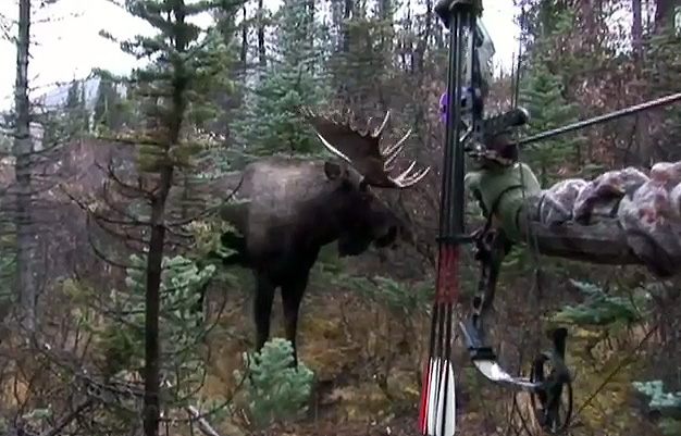 Enter to Win Wasp's Moose Hunt of a Lifetime!