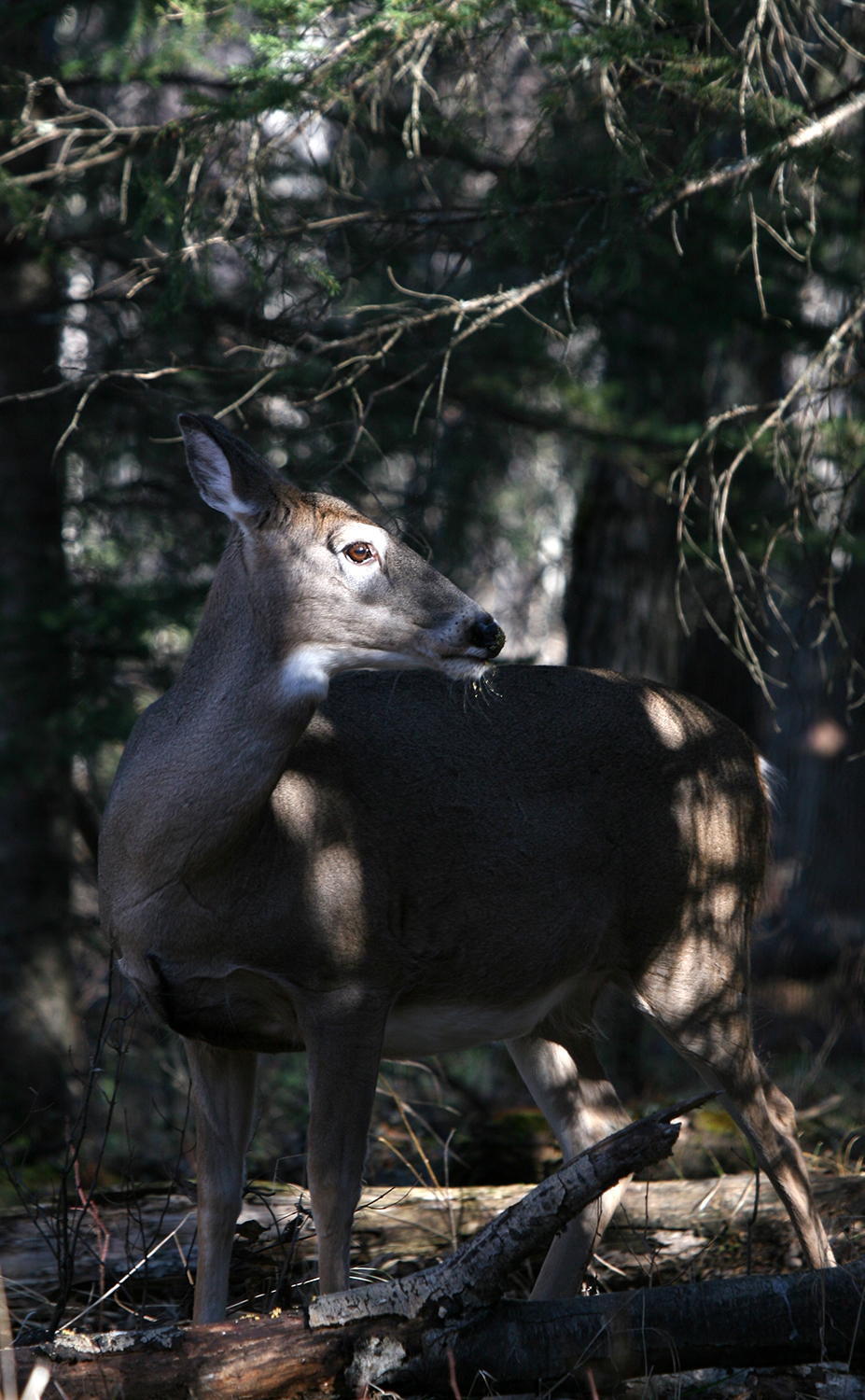 Is your deer population where you want it or has your state been putting too much pressure on
