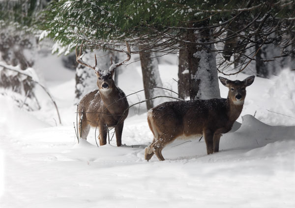 When the temperature drops and the snow flies, the peacefully silent deer woods seem magical.