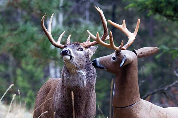 deer decoys