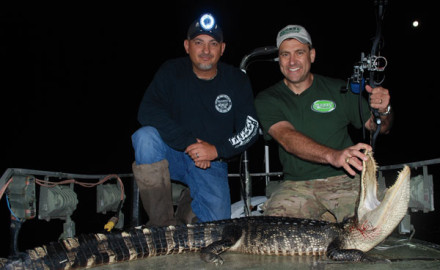 Hunting dangerous game with a bow is exciting, but having an alligator come directly toward you at