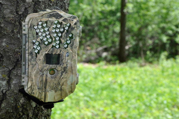 10 Best Trail Cameras and Accessories Right Now