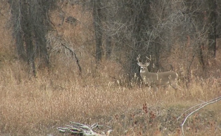 Fast and Furious Montana Whitetail Hunt