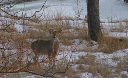Jeff Frey goes after whitetail bucks in two states, Wisconsin and South Dakota.