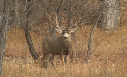 C.J.Winand heads to both Colorado and Kansas for two very different deer hunts.