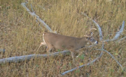 Curt Wells heads to Montana on a whitetail hunt and goes after a buck he can't resist.